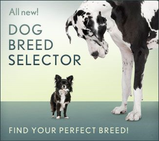 Dogs 101 New Tricks Dog Breed Selector Dog Breeds Dogs