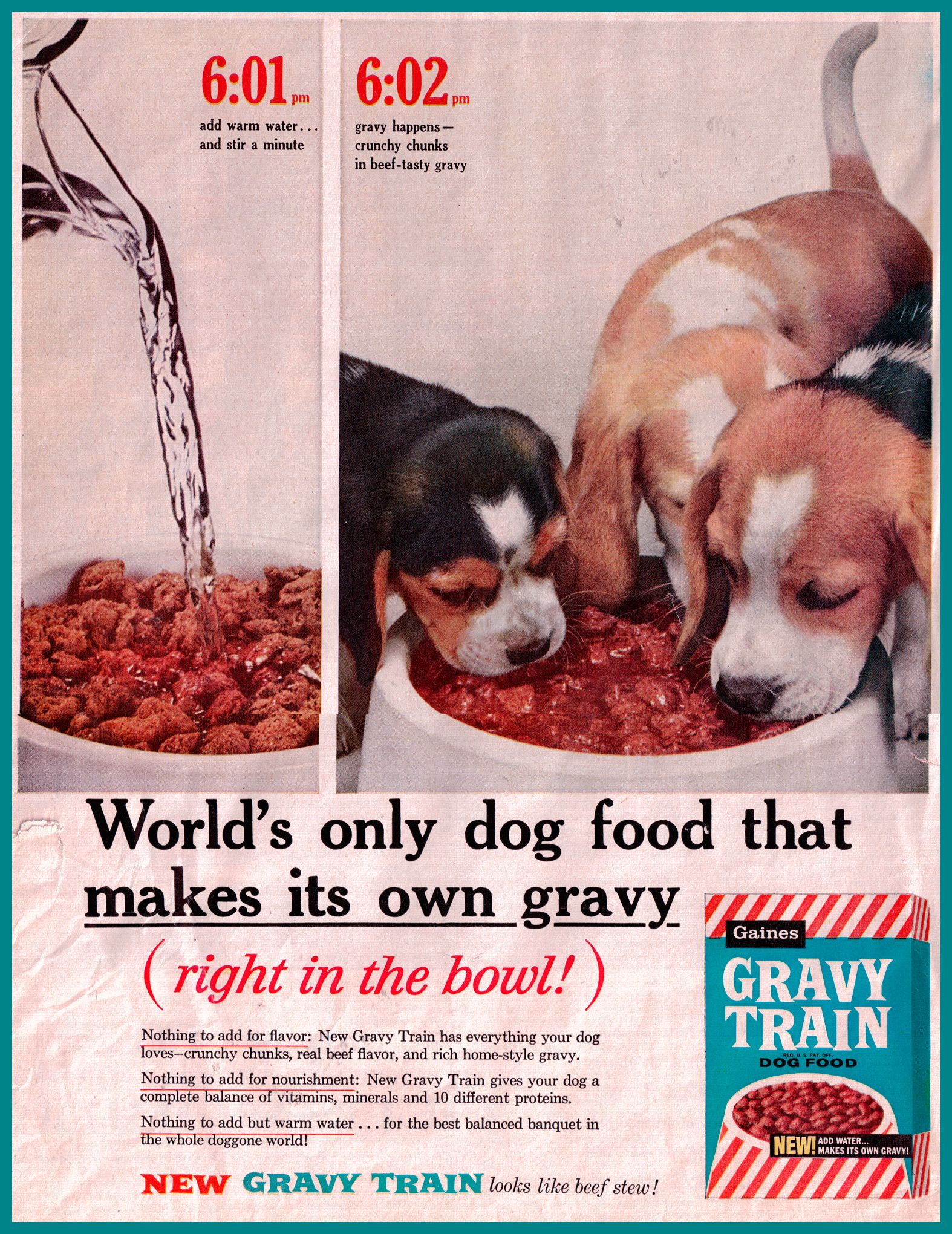 1961 Gravy Train Ad Featuring Beagles This Is What I Feed My Dogs