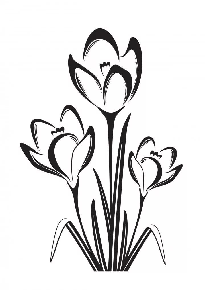 Картинки цветов весенних черно белые