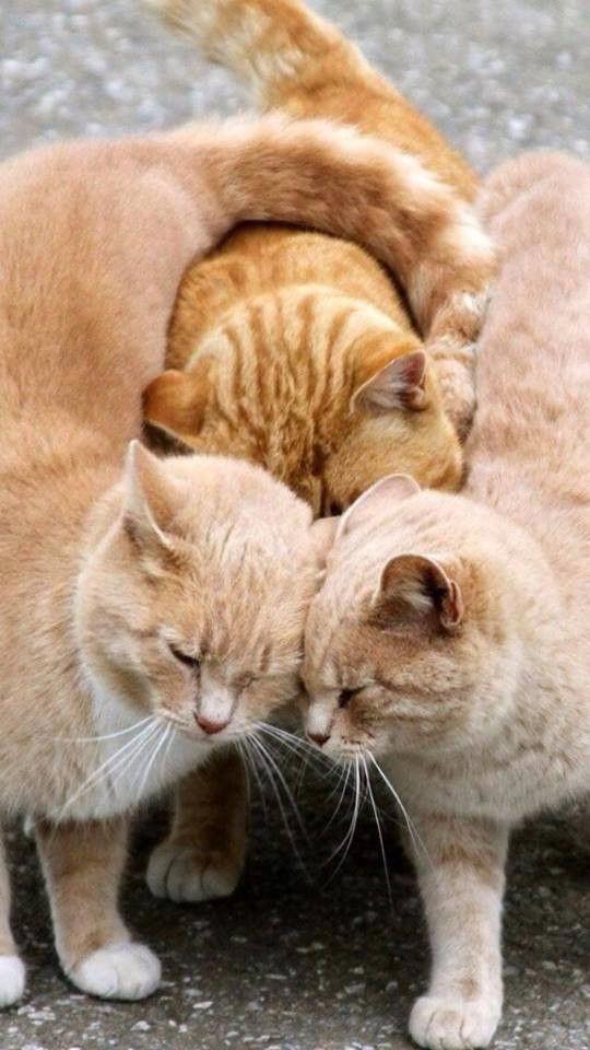 Pin by Made💝 on الحب والصداقة بين الحيوانات..Love and