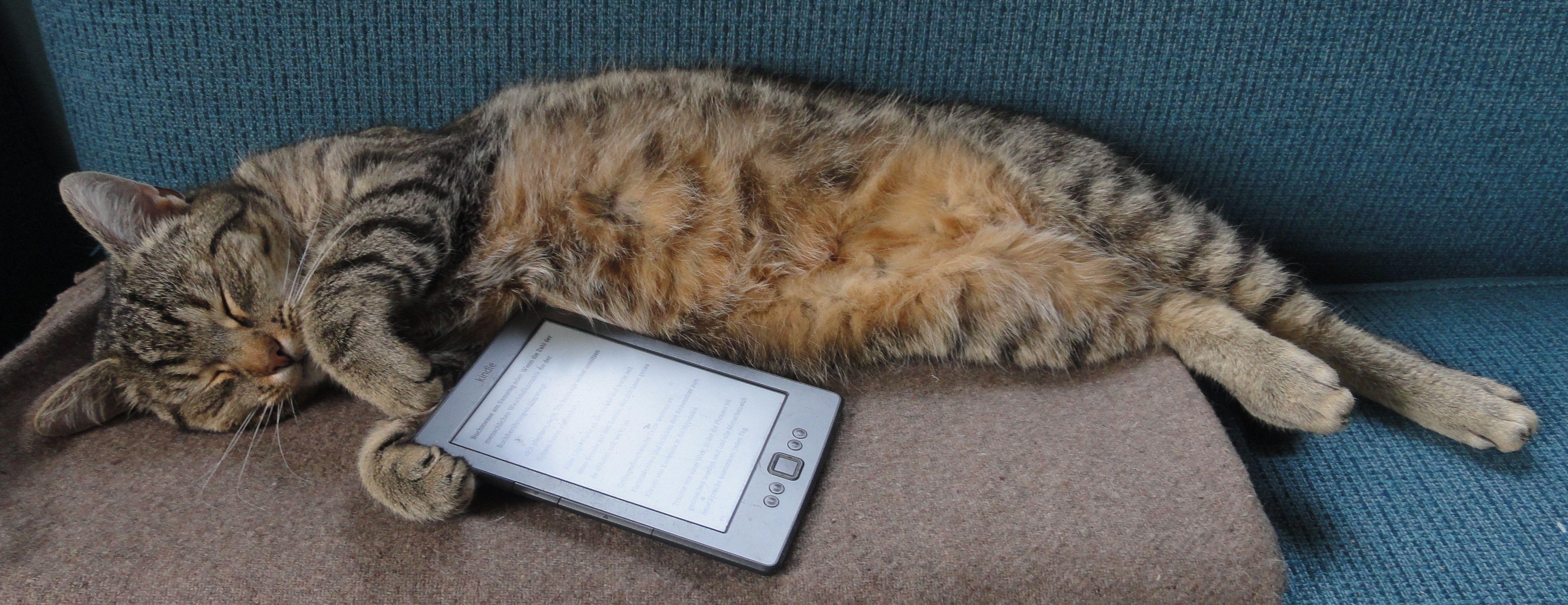 Laser Frohmann, Fachlektor für Cat Content.