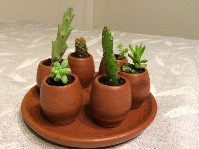 Peque as galaxias small galaxies peque os cactus en - Cactus en macetas pequenas ...