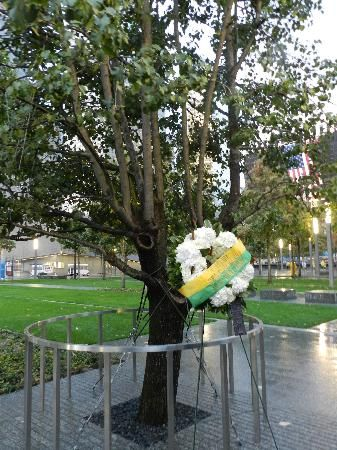 The Survivor Tree - 9/11