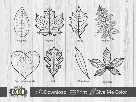 Fall Leaves Coloring Adult Coloring Book Coloring Pages Leaves Of ...