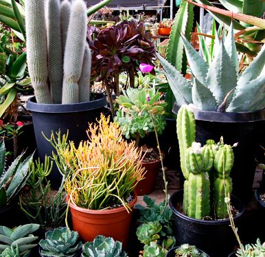 Sunset Nursery One Of The Ten Best Nurseries In Los Angeles 4368 W