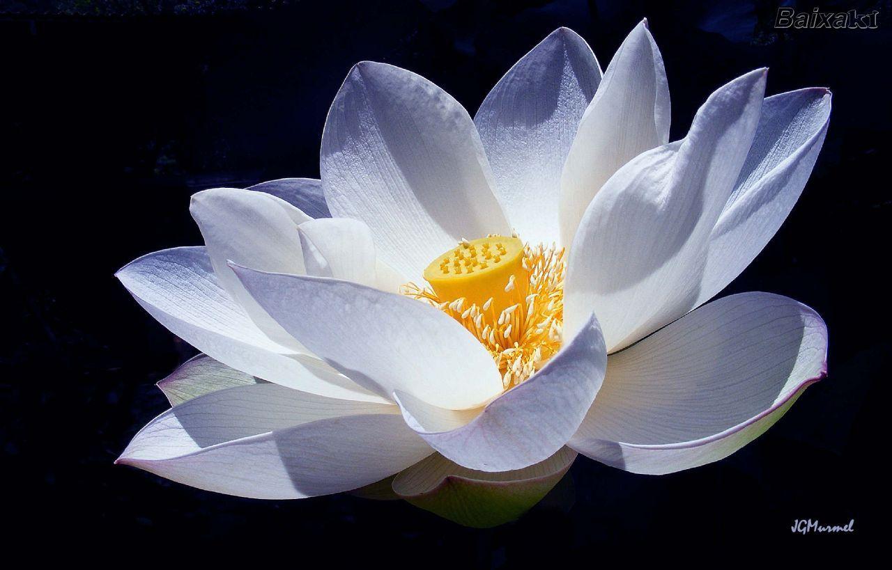 Lotus flower embroidery origami lotus flower buzzle web portal lotus flower embroidery origami lotus flower buzzle web portal intelligent life on the izmirmasajfo