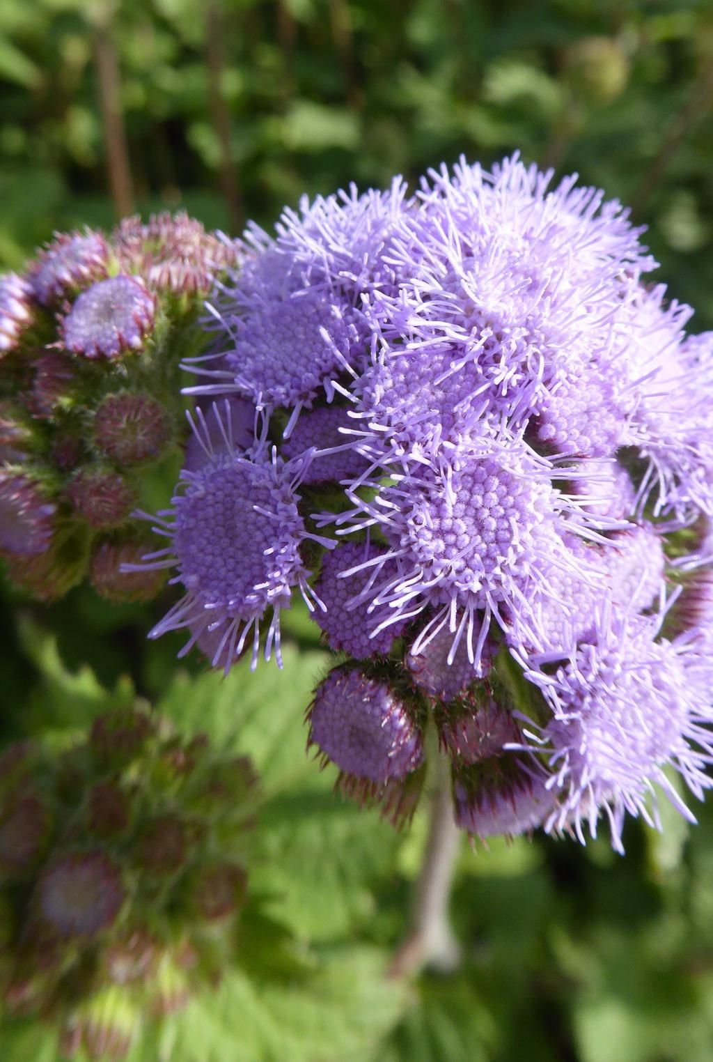 Gardenbeauty on Plants, Plant sale, Perennials