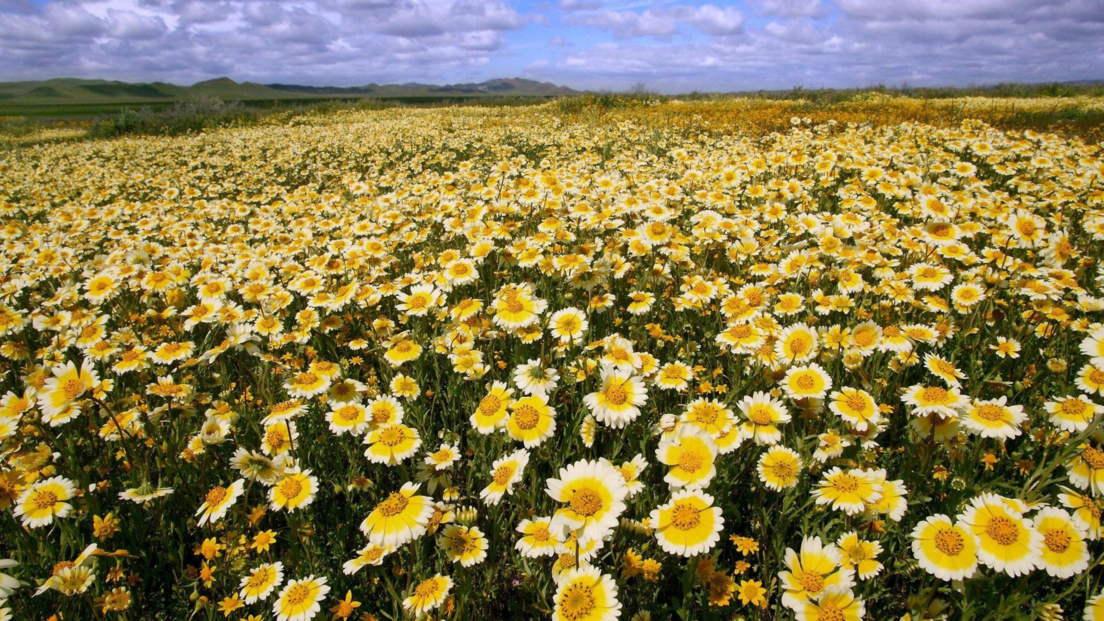 Fondos De Pantalla O Wallpapers Naturaleza Flores La: Hermosos Fondos Naturaleza Hd Con Margaritas (7)