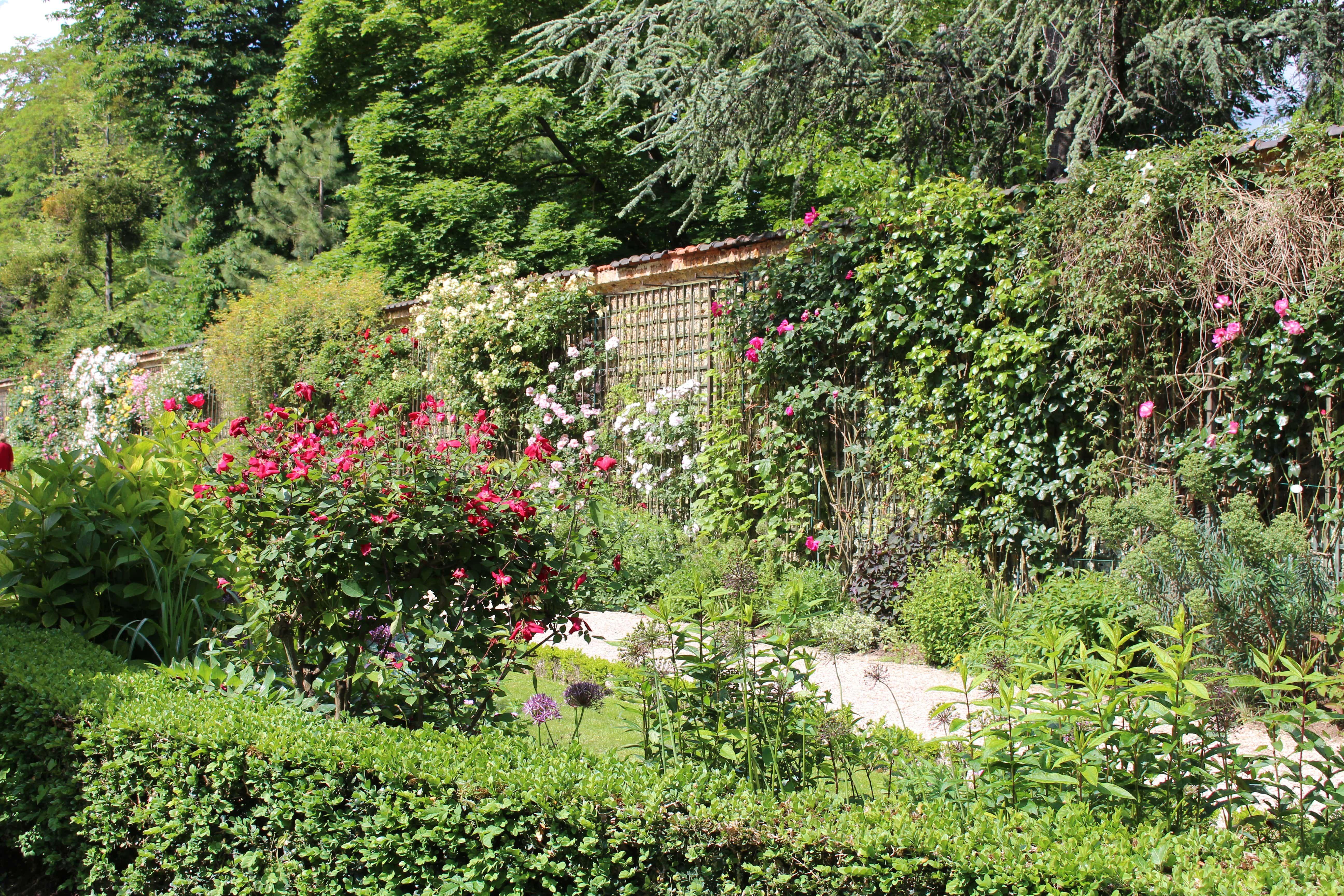 La Roseraie Grimpante Des Jardins De Bagatelle Desespoir Du Singe Entree Du Jardin Jardins