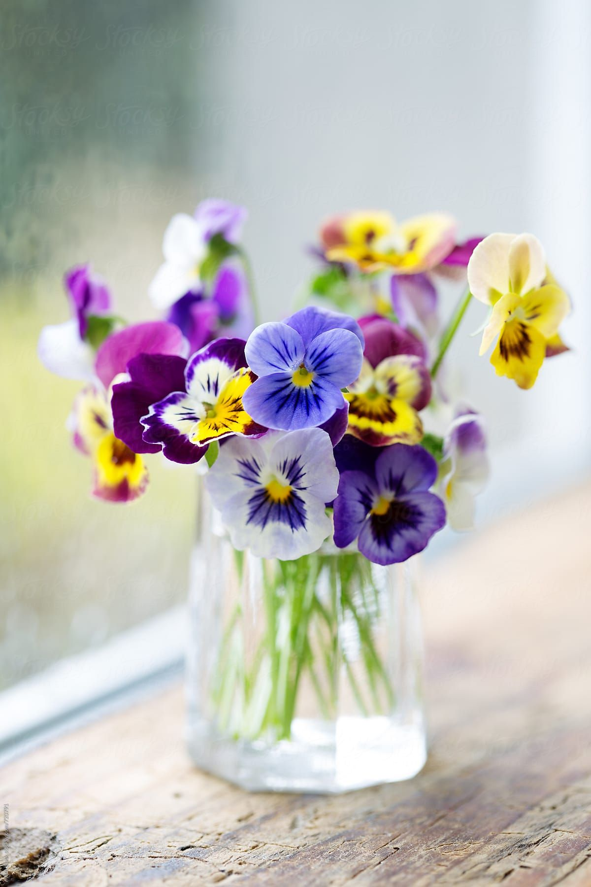 Vase Of Pansies On A Window Sill By Ruth Black For Stocksy United Pansies Flowers Beautiful Flowers Pretty Flowers