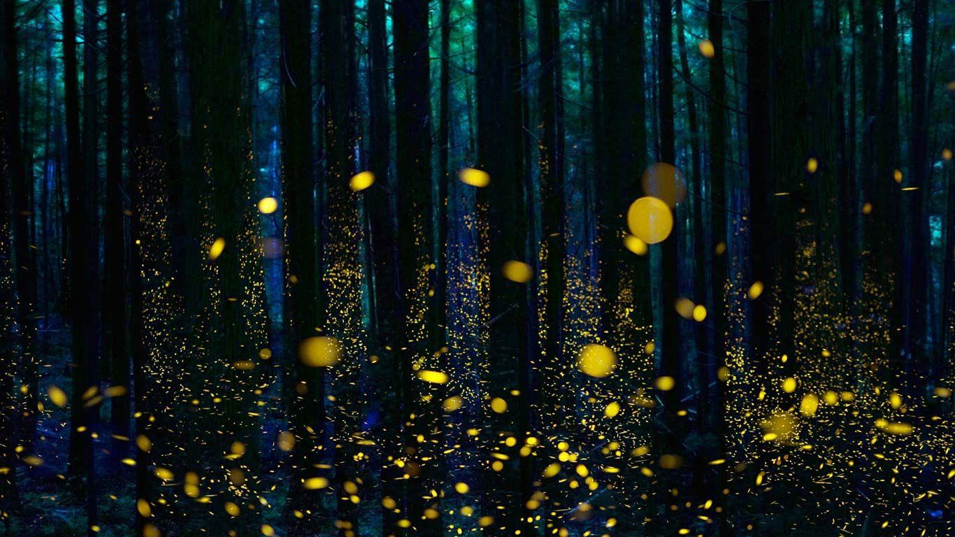 fireflies deutsch