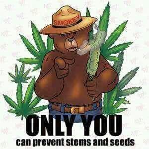Only you Can Prevent  Forrest Fires  take it from Smokey ♌