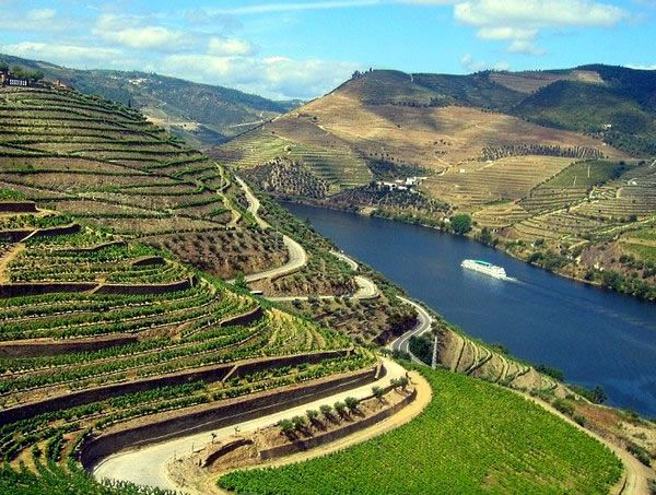 Douro vineyards.