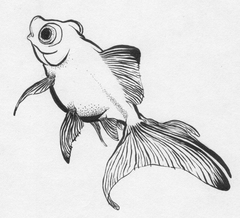 Goldfish Ink Drawing ORIGINAL DRAWING 3000 Via Etsy