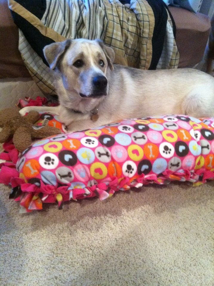 DIY no sew dog bed! Just pieces of fleece fabric and an oversized pillow ( & DIY no sew dog bed! Just pieces of fleece fabric and an oversized ... pillowsntoast.com