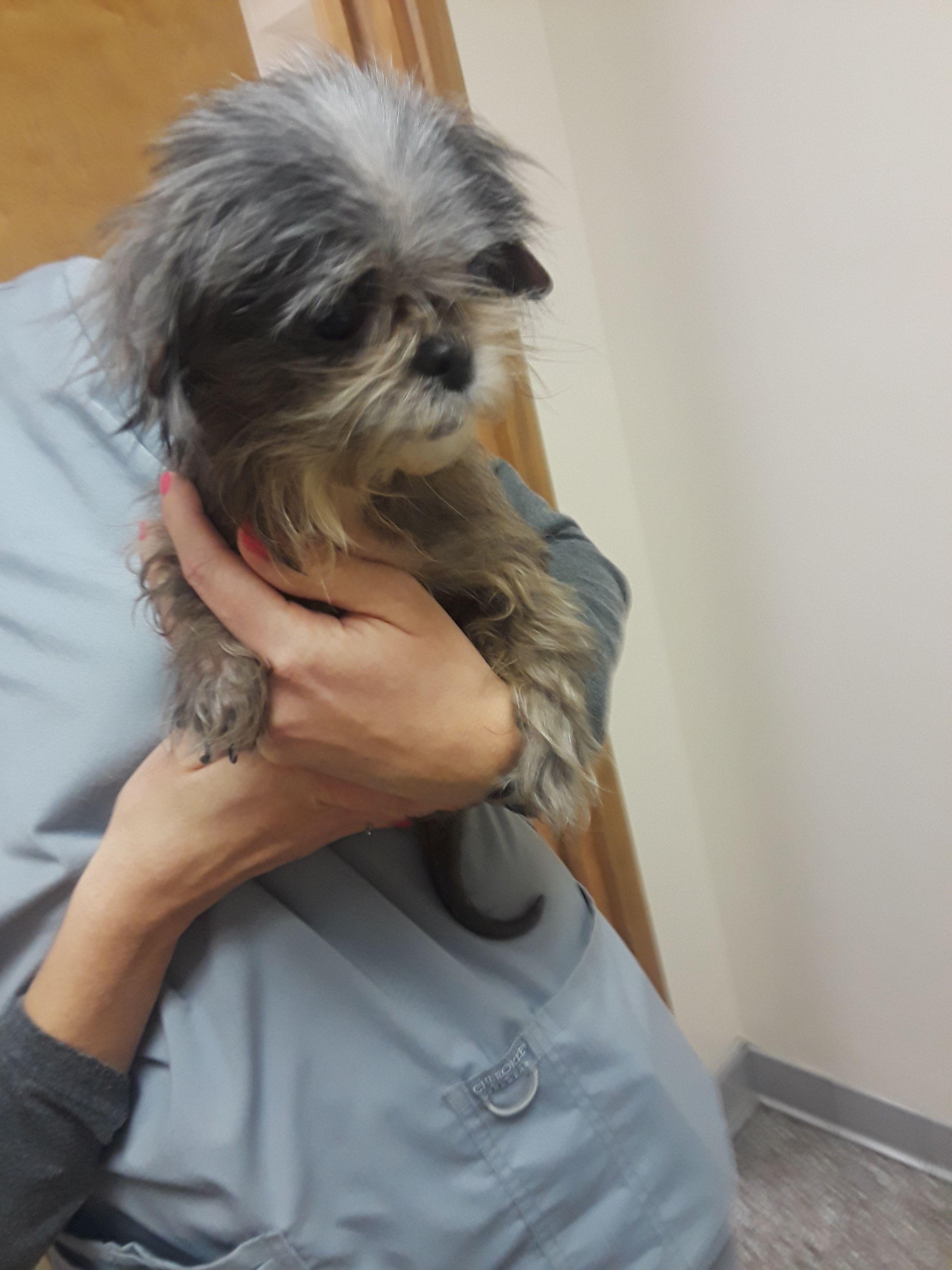 Adopt Annabelle On Adoption Dog Adoption Dogs