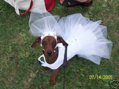 Small Dog Bride S Dress Wedding Costume Comes In By Doggieduds123