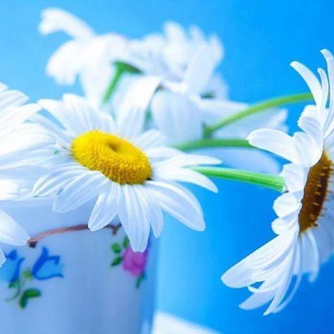 الحمدلله على الإعتياد على التناس ي على كل فتره استصعبنا مرورها ومر ت ذكر طاعه طبخ حلويات مكياج اناقه تصاميم الم Flower Images Daisy Flower Daisy