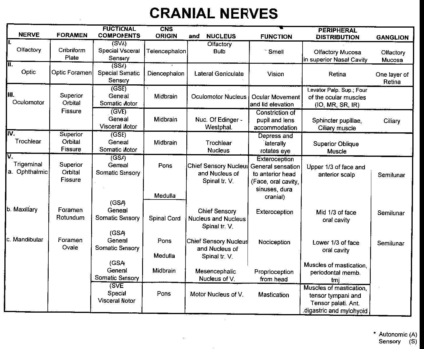 Anat Cranial Nerve Detailed Spreadsheet 1
