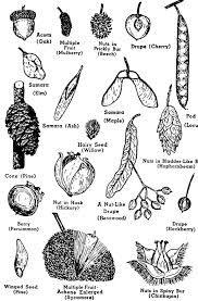 leaf identification chart printable - Google Search | Tree ...