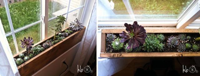 Great DIY: Seven Super Pretty Succulent Planters: How To Make A Succulent  Windowsill Box