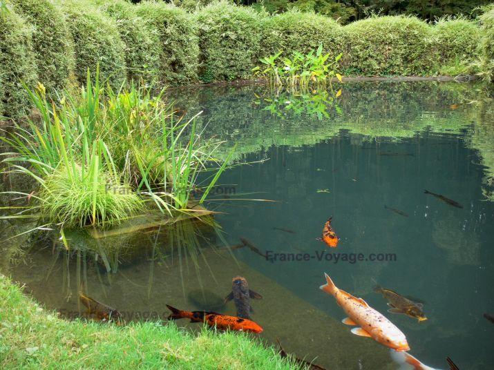 Bambouseraie de prafrance bambouseraie d 39 anduze sur la for Entretien bassin carpe koi
