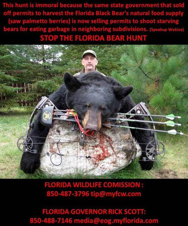 There will be no Florida bear hunt in 2016.  But the battle continues to stop a 2017 hunt.