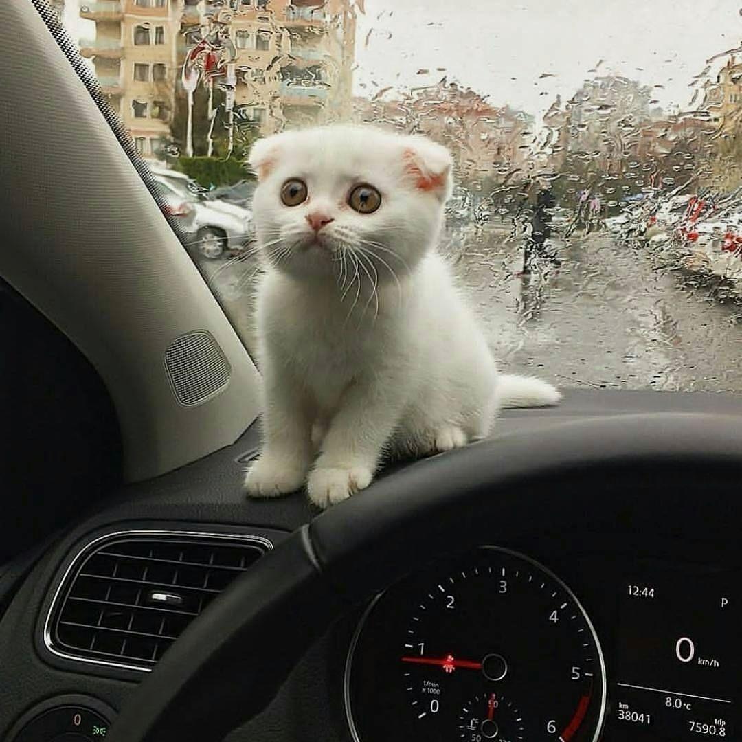 Von Doppeltipp Baby Katzen Susse Tiere Niedliche Tierbabys