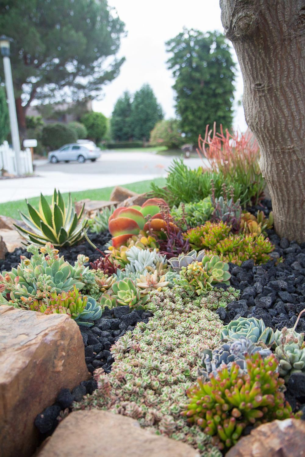 Pin By Tia Knuth On School Garden In 2020 Succulent Landscaping