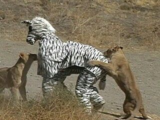 """I think we made a little mistake! """" Funny animals, Funny"""