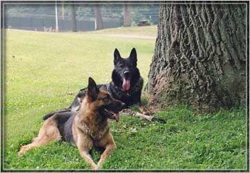 Stonehill Ct Also Protection Training German Shepherd Training