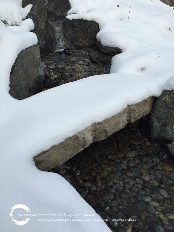 954c7f53167d9129cfc880d12cdce896 - The Koi Whisperer Sanctuary & Japanese Gardens