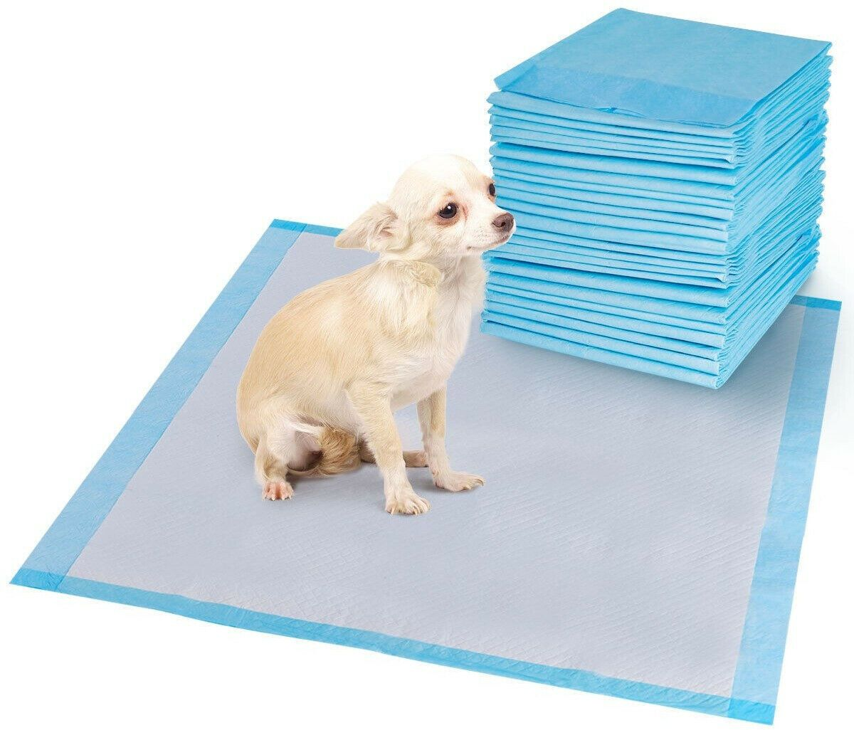 how to train a dog to wee on pads