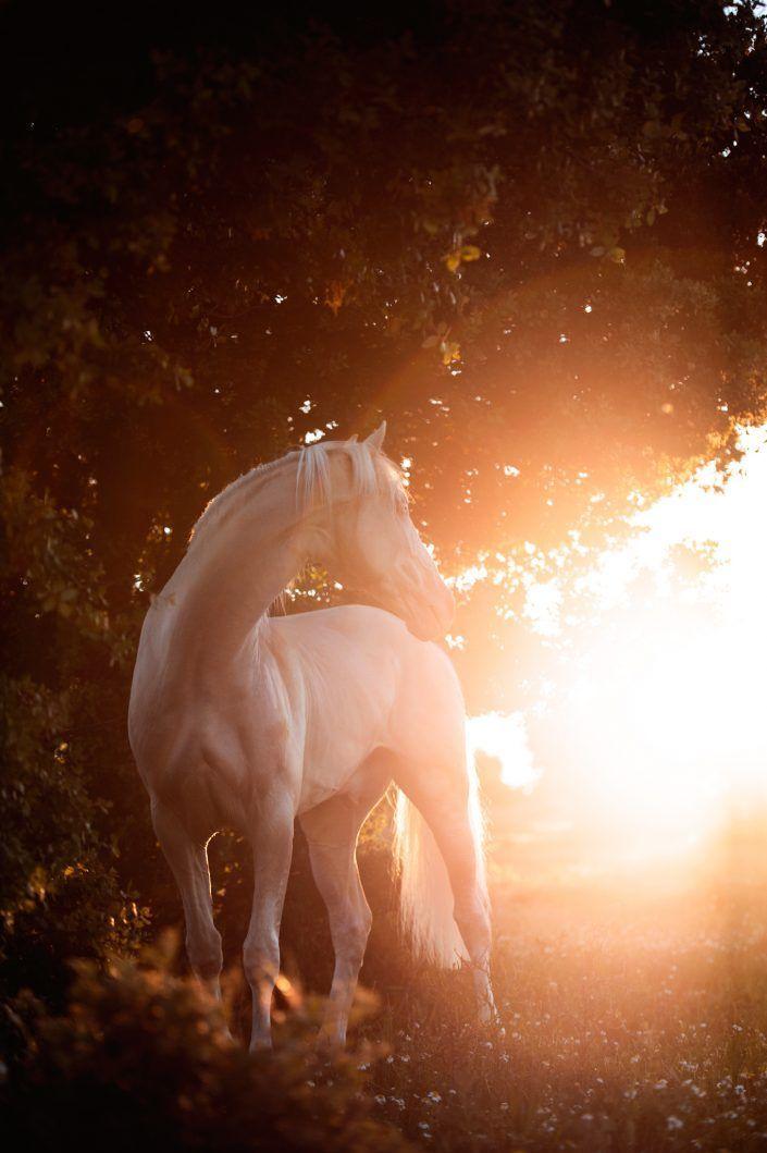 Fotos Pferde In Der Natur I Anna Ibelshauser Fotos Pferde In