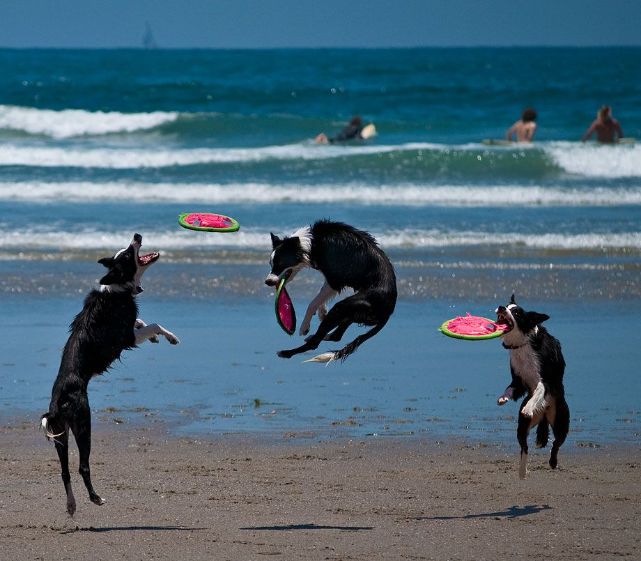 We So Wished Pumpkin Was With Us To Experience This Great Beach Ocean Dog Park