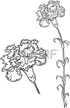 Carnation Stock Photos Images Royalty Free Carnation Images And Pictures Carnation Drawing Flower Drawing Floral Drawing