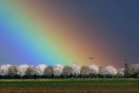 Resultado de imagen de arcoiris verdaderos