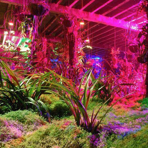 Plants growing under pink LED lights gardens Pinterest