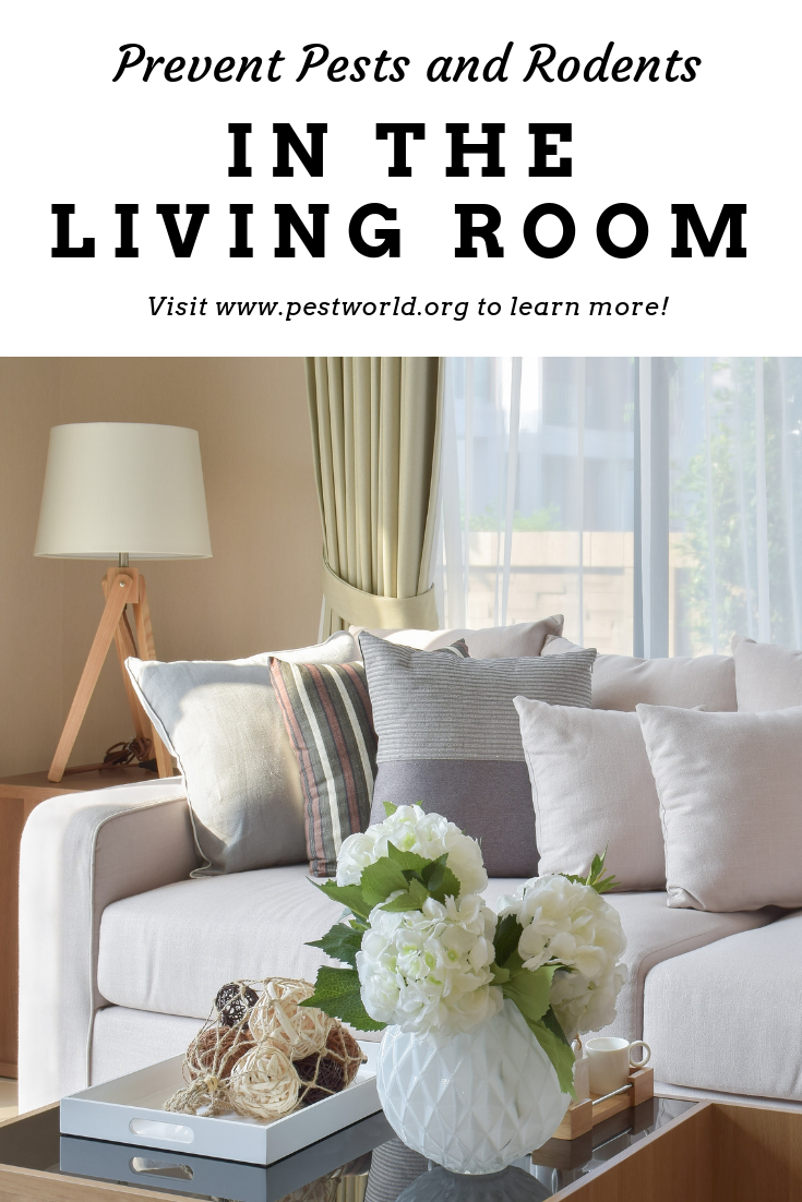 Everyday Tips To Prevent Bugs And Insects In The Living Room Living Room Room Bugs And Insects