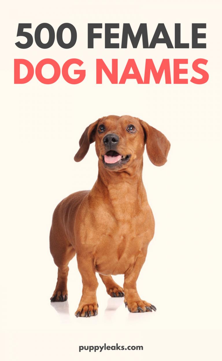 500 Popular Female Dog Names Dog Names Dog Names Female Dog