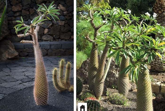 25 plantas resistentes ao sol plantas sol e jardinagem - Plantas resistentes al sol ...
