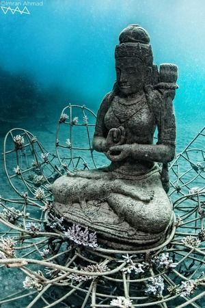 Coral goddess reef in Bali. Amazing.