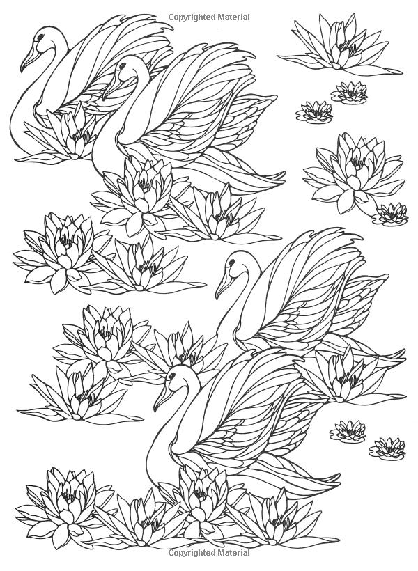 Designs for Coloring: Birds: Ruth Heller: 9780448031507: Amazon.com ...
