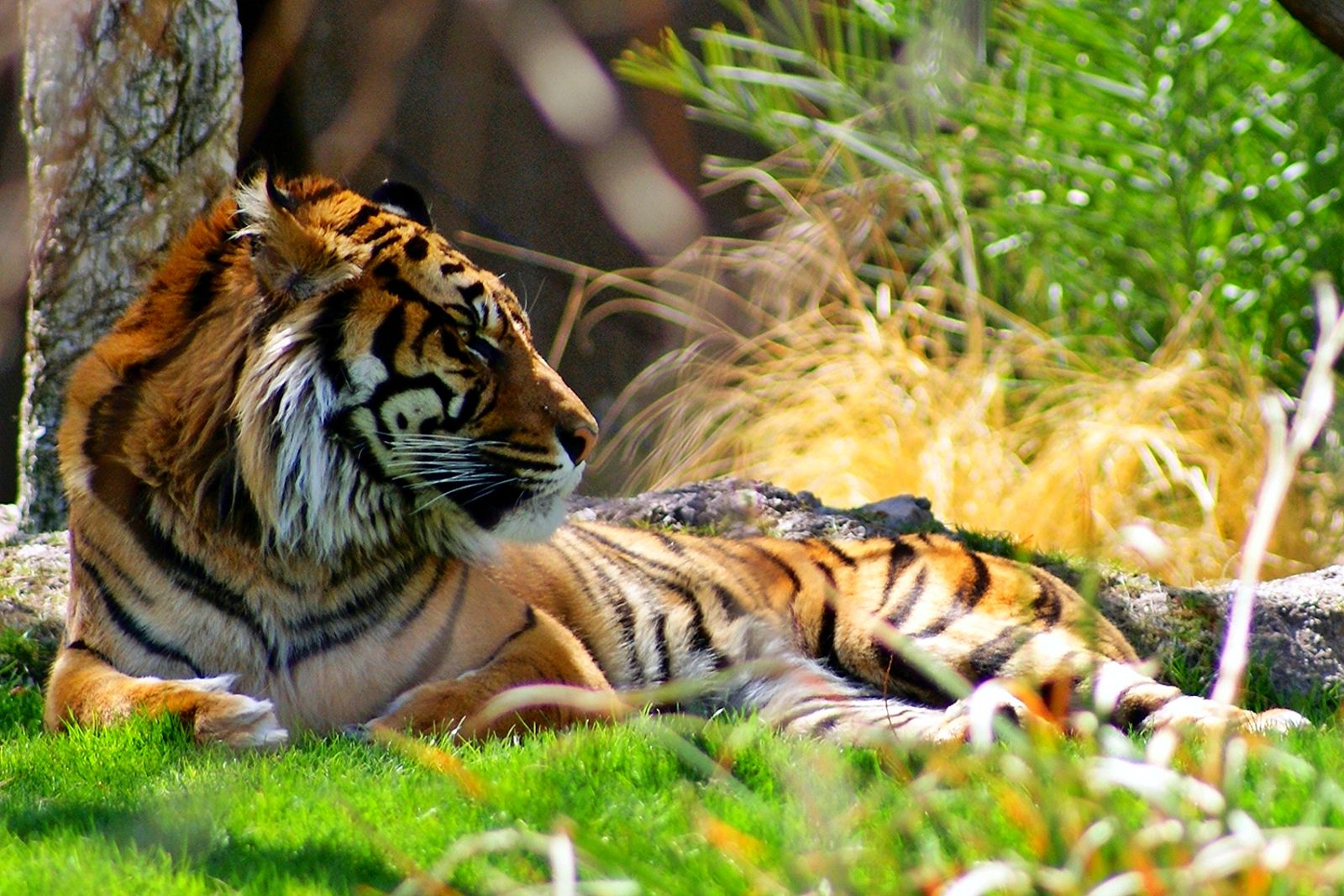 5 Fantastic Organizations Fighting to Protect Endangered