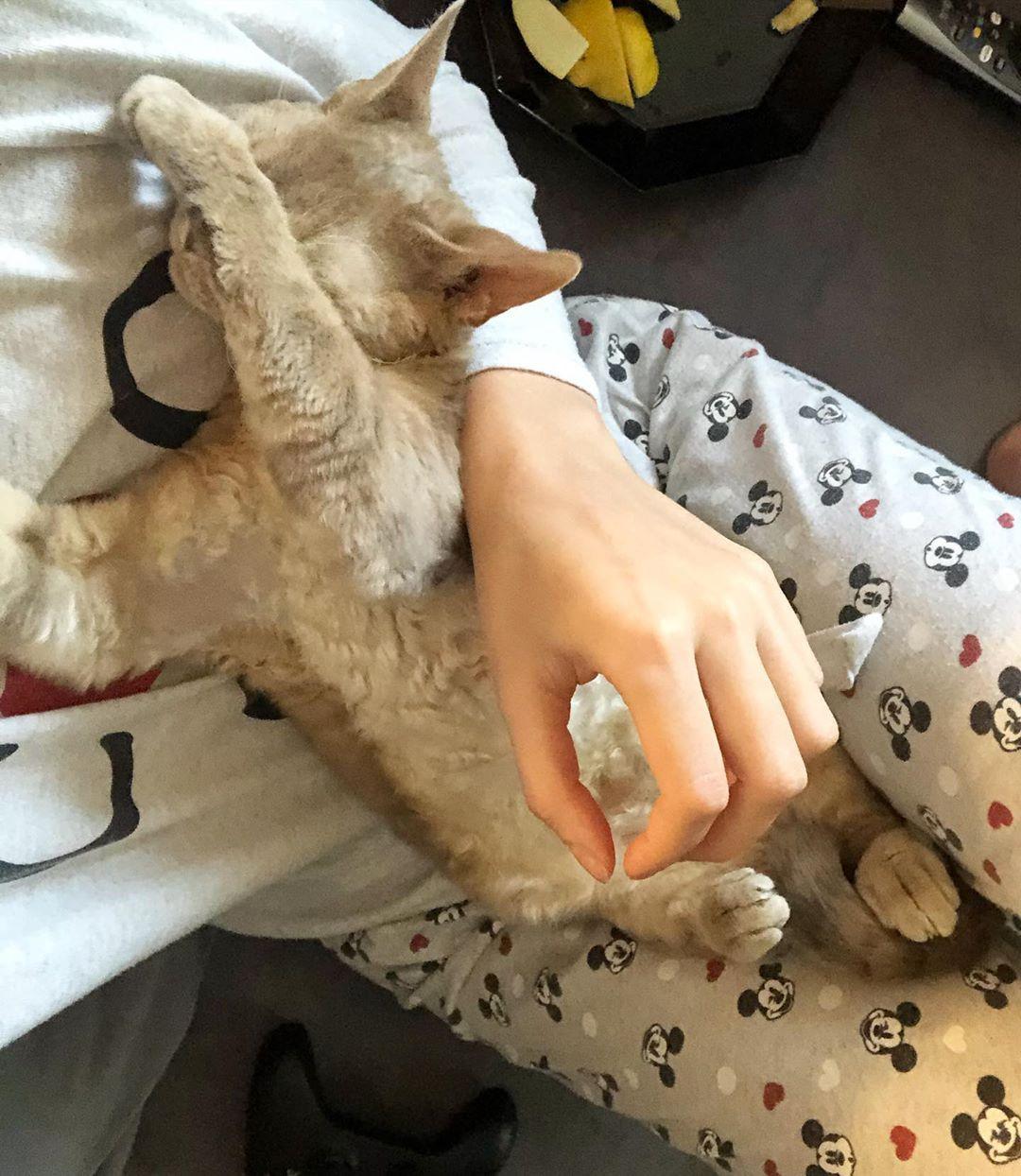 No photos please . . #devonrex #catsofinstagram #pets #catlovers #catslife #devonrexcat #devonlife #devonrexrules #devonrexlover #devonrexofinstagram #котики #девонрекс Instagram BridgeNo photos please ....