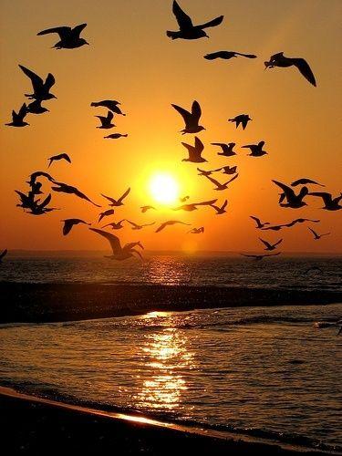 Sunset on Sanibel & Captiva Island, Florida, USA