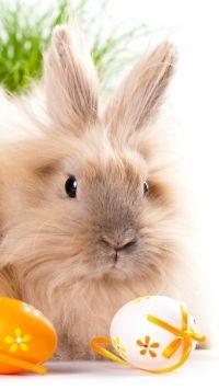 Animal Rabbit Mobile Wallpaper
