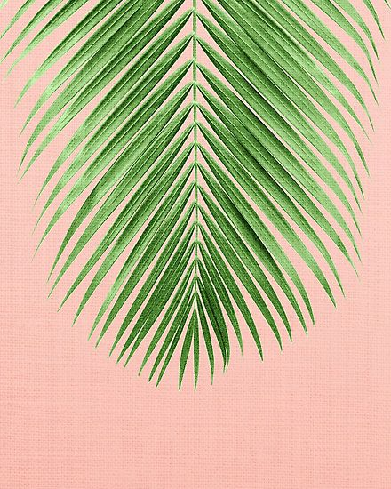 Palm Leaf Photographic Print By Thegypseatribe Leaf Photography Pink Wallpaper Backgrounds Tree Art