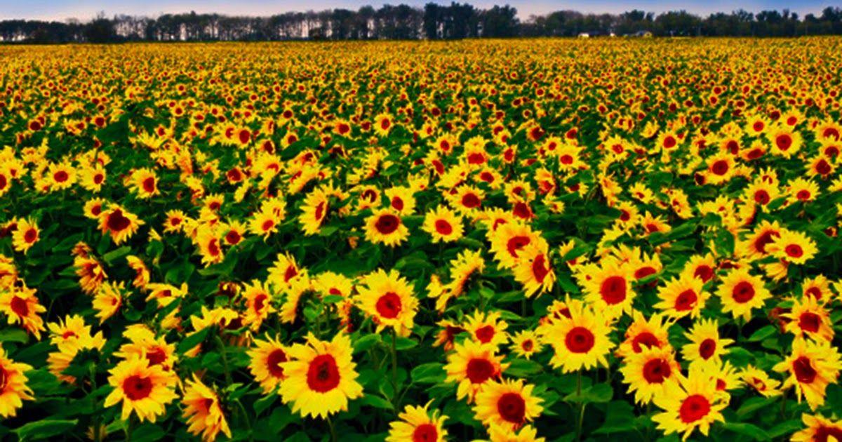 Paling Populer 20 Gambar Pemandangan Bunga 6 Pemandangan Yang Mengagumkan Di Hokkaido Gz681 40 50 Lukisan Pemandangan Yang Indah U Pemandangan Anggrek Bunga