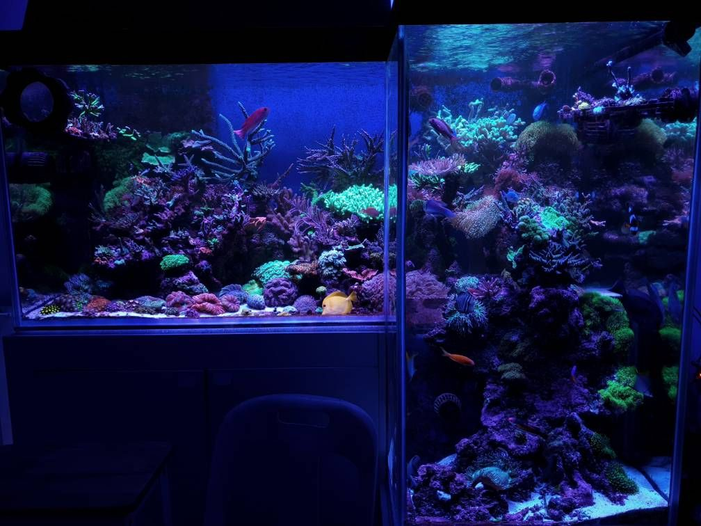 How Much Of A Temperature Swing Is Acceptable In A Reef Tank Discuss Here On R2r Photo Jasonw Https Www Reef2ree Reef Tank Saltwater Aquarium Temperatures